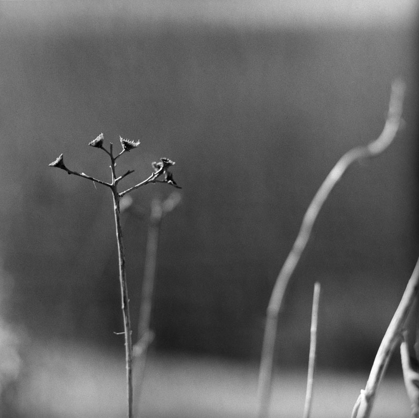 natura-morta-14