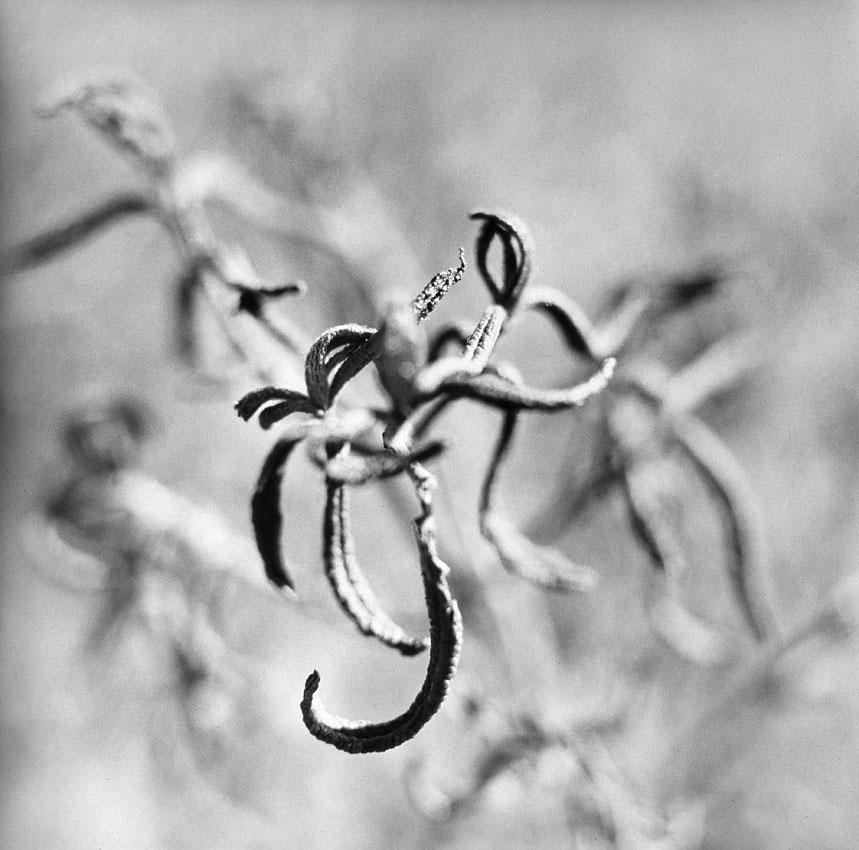 natura-morta-3