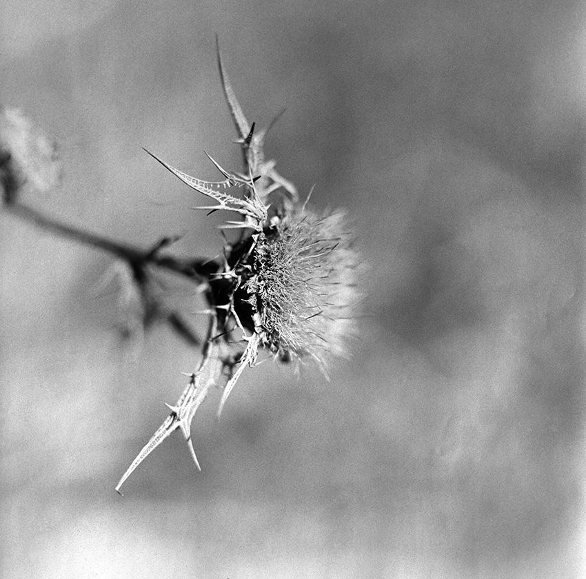 natura-morta-16